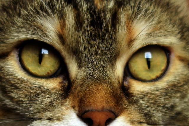 Alice's eyes..., Canon POWERSHOT G5 X