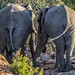 Elephant Butts - Limpopo, South Africa by FyreMael