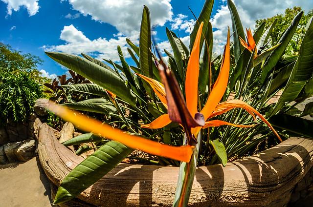 Orange flower ToL garden