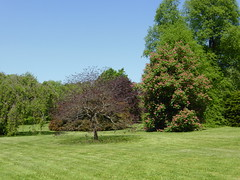 Planting Fields Arboretum - Oyster Bay (54)