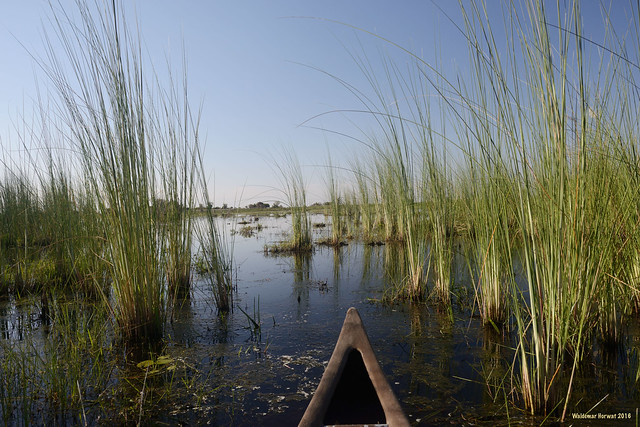 Canoeing Through Reeds