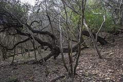 Forest - O.P. Schnabel Park - San Antonio - Texas - 18 December 2016