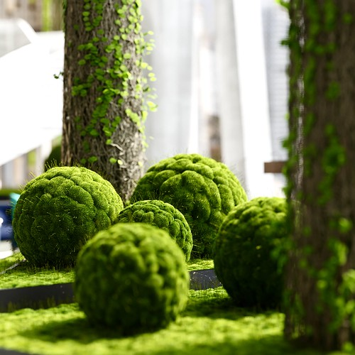 Moss balls closeup