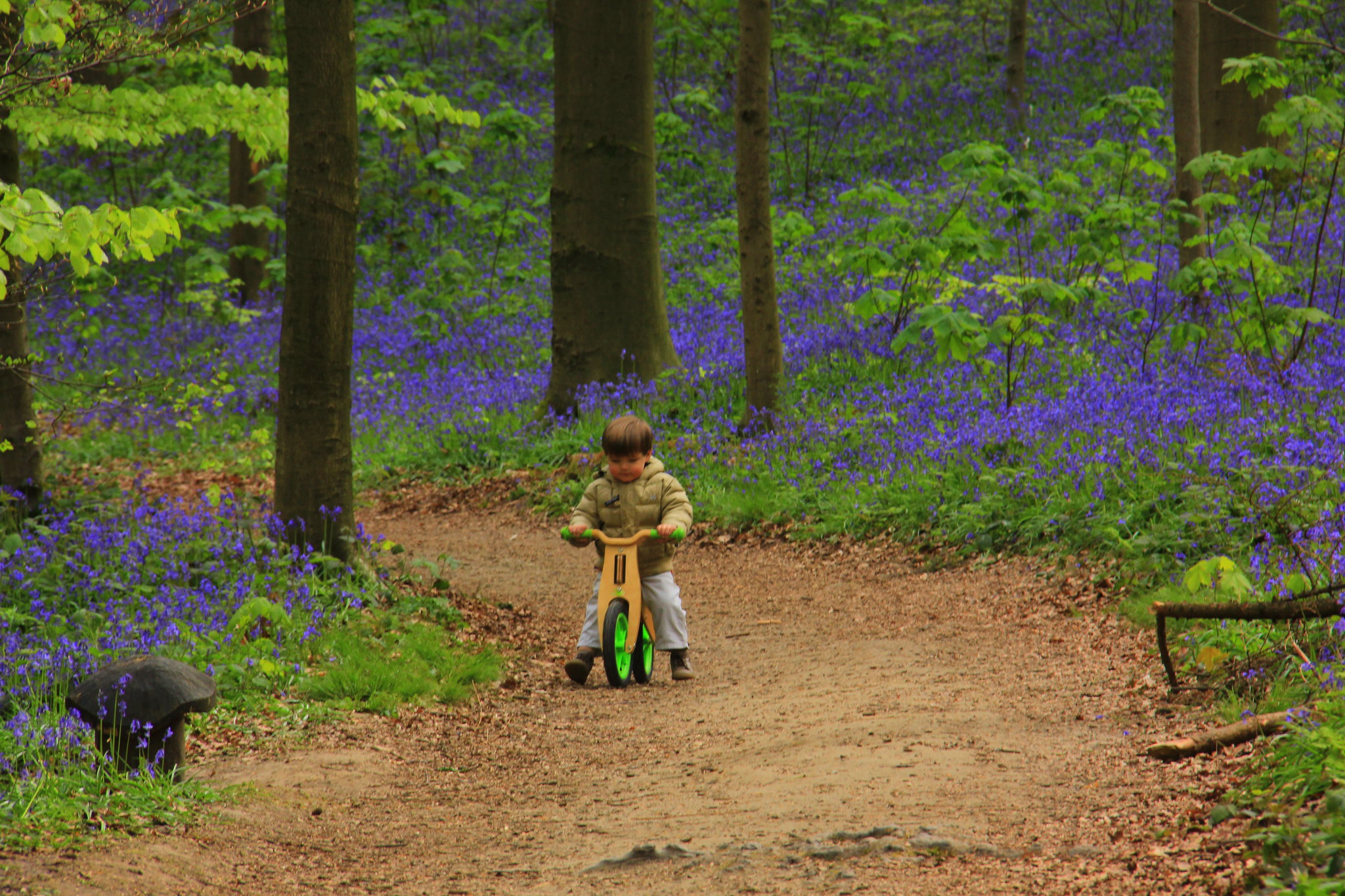 hallerbos blue forest is a great day trip from brussels