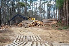 North Carolina, Wake County, Log Landing