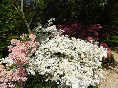 Planting Fields Arboretum - Oyster Bay (6)