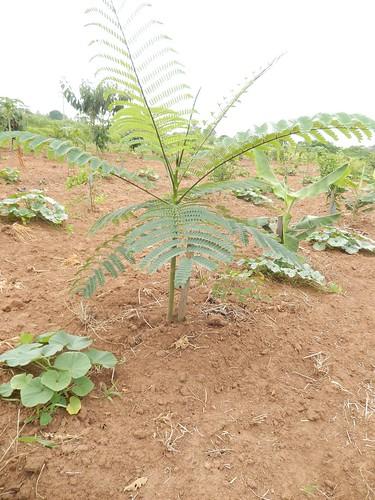Aspecto da Recomposição Florestal (OUT 2015)