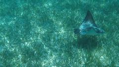 Belize Snorkeling-015.jpg