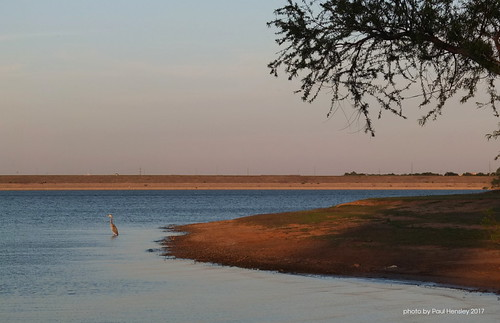 dam lake heron bird sunset