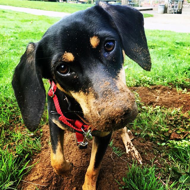 Tahlequah loves to dig