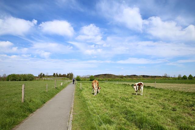 wandeling domein Parkabdij Heverlee