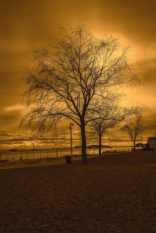 HTO Park Tree - Urban Nature (Toronto, Ontario)