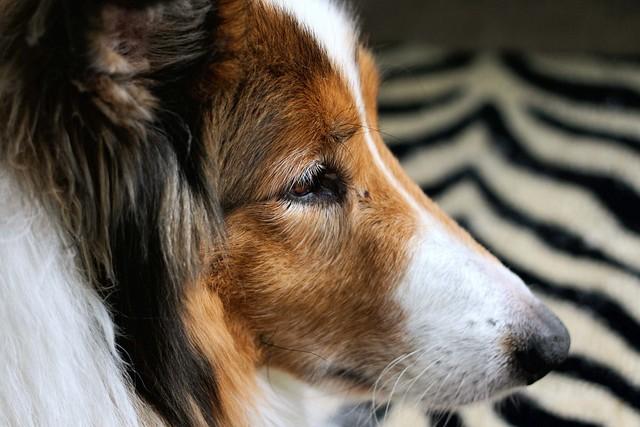 Contemplative Ben