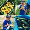 #zucchini #tomatoes #farming #zane