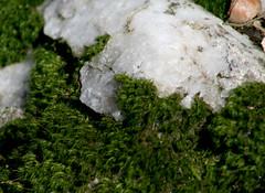 bryophyte covered quartz