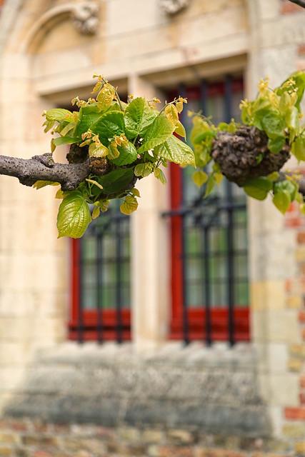 Brugge Windows
