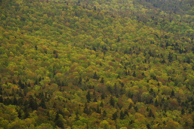 Adirondack Greens