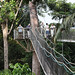 Canopy Walkway Atta Lodge (Peter Stott)