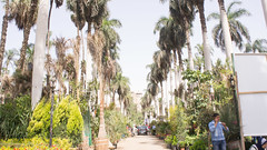 The famous palm trees of Orman garden