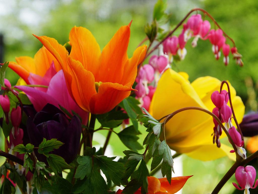 Blumen Sagen So Viel Mehr Als Worte Ingrid Eulenfan Flickr