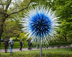 Sapphire Star (2010), Dale Chihuly Exhibit at the New York Botanical Garden
