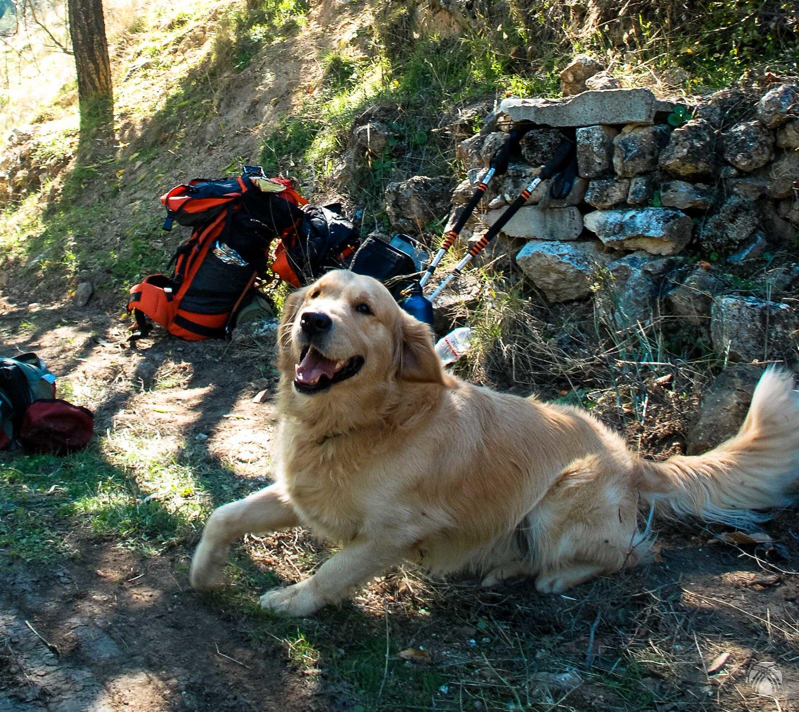 Moss contento de estar en la montaña