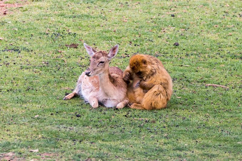 Fotos de animales de todo tipo incluyendo mascotas que más te gustan - Página 6 34339996790_597984cd7a_c
