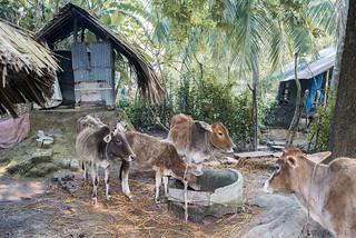 Bangladesh - Byn Dangmari