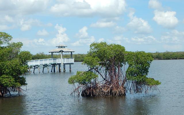 Mangroves, Nikon COOLPIX L830