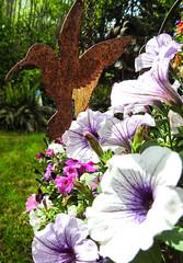 Blooms&Texture-4396