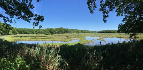 Coastal Wetlands - East Lyme