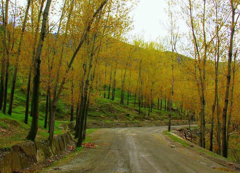 kashmir road leading to kokernag in spring is lined with bare trees