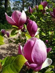 Westonbirt Arboretum in Gloucestershire