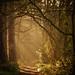 April Sunshine by UK Nature Photography