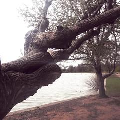 #monstertree #treeface #wierdtree #denvercolorado #washingtonpark