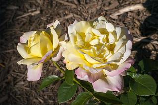 Brookside Gardens  (41)