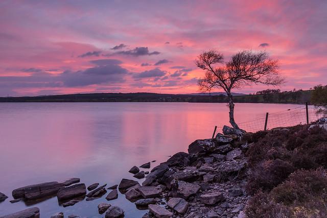 Lone Tree Sunset ..