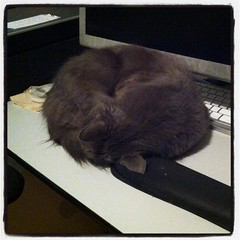 Poofy is using the computer right now.