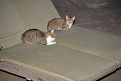 Eric's Cats CV 7-6-16 11