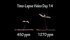 More Co2 is GOOD for Earth - Seeing is Believing - Time Lapse Video_ 2 Plants Growing