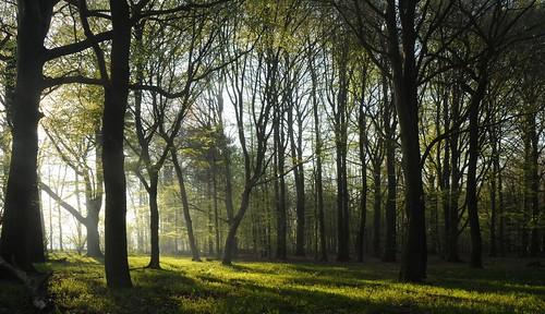 Frühlingswald; Bergenhusen, Stapelholm (52)