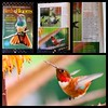 Another magazine published one of my #hummingbird photos! :grin::grin: