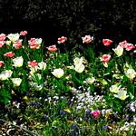 In the Fragrance Garden