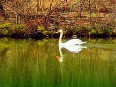 Beauty on the Lake
