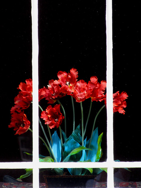 red flowers, Canon POWERSHOT SX10 IS