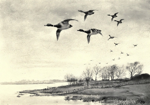public-domain-vintage-book-illustration-of-ducks-flying