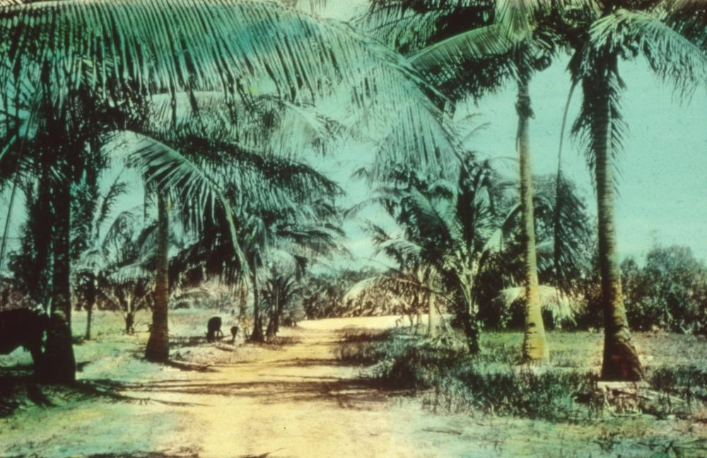 Palm trees on either side of the road to Hope Valley Mission