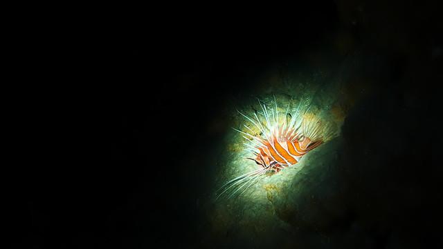 真っ暗洞窟の中にネッタイミノカサゴ♪ ちょいとスヌート風に撮影w