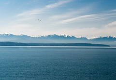 The Olympic Mountains from Ebey's Landing