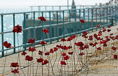 Poppies On The Pier - for Fence Friday!
